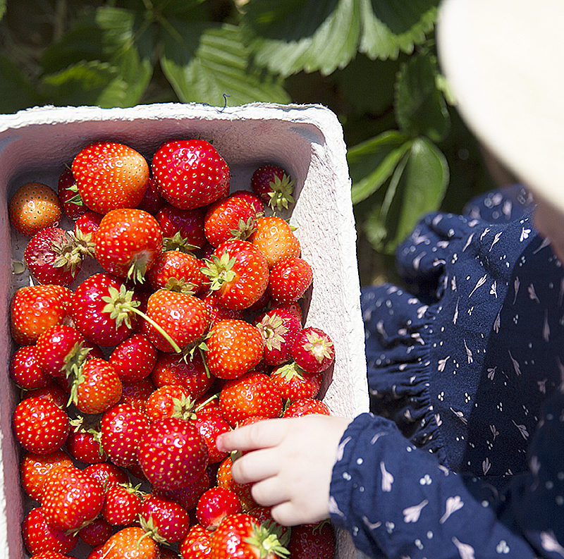 Picking strawberries – a childhood memory