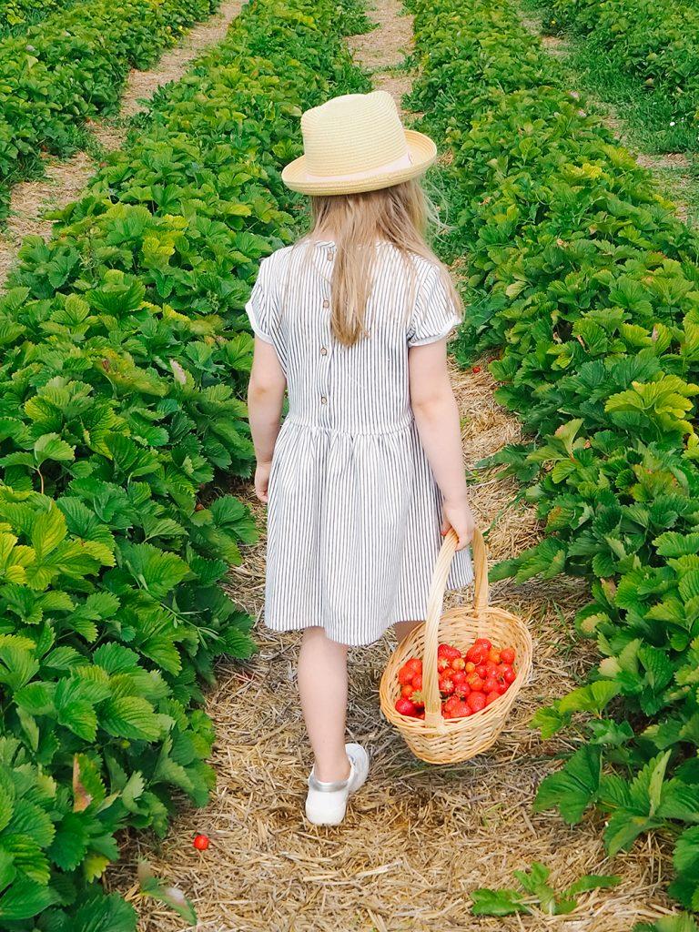 CF CosyFoxes Erdbeeren pflücken 2020