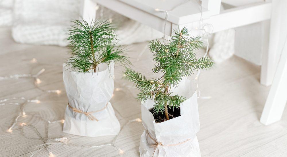 Geschenke für Männer – Inspiration für Adventskalender & Weihnachten
